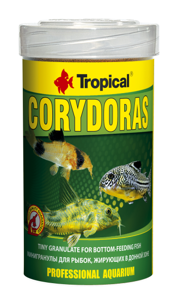 Corydoras - Tropical - Aquaristik-Deals